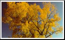 ks_tree